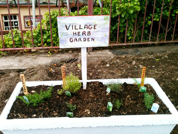 annascaul village herb garden troughs  herb growing ireland  how, Beautiful flower