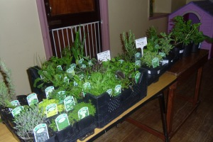 Locally grown Herb Plants Annascaul