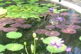 Indoor aquatics at Kew Gardens