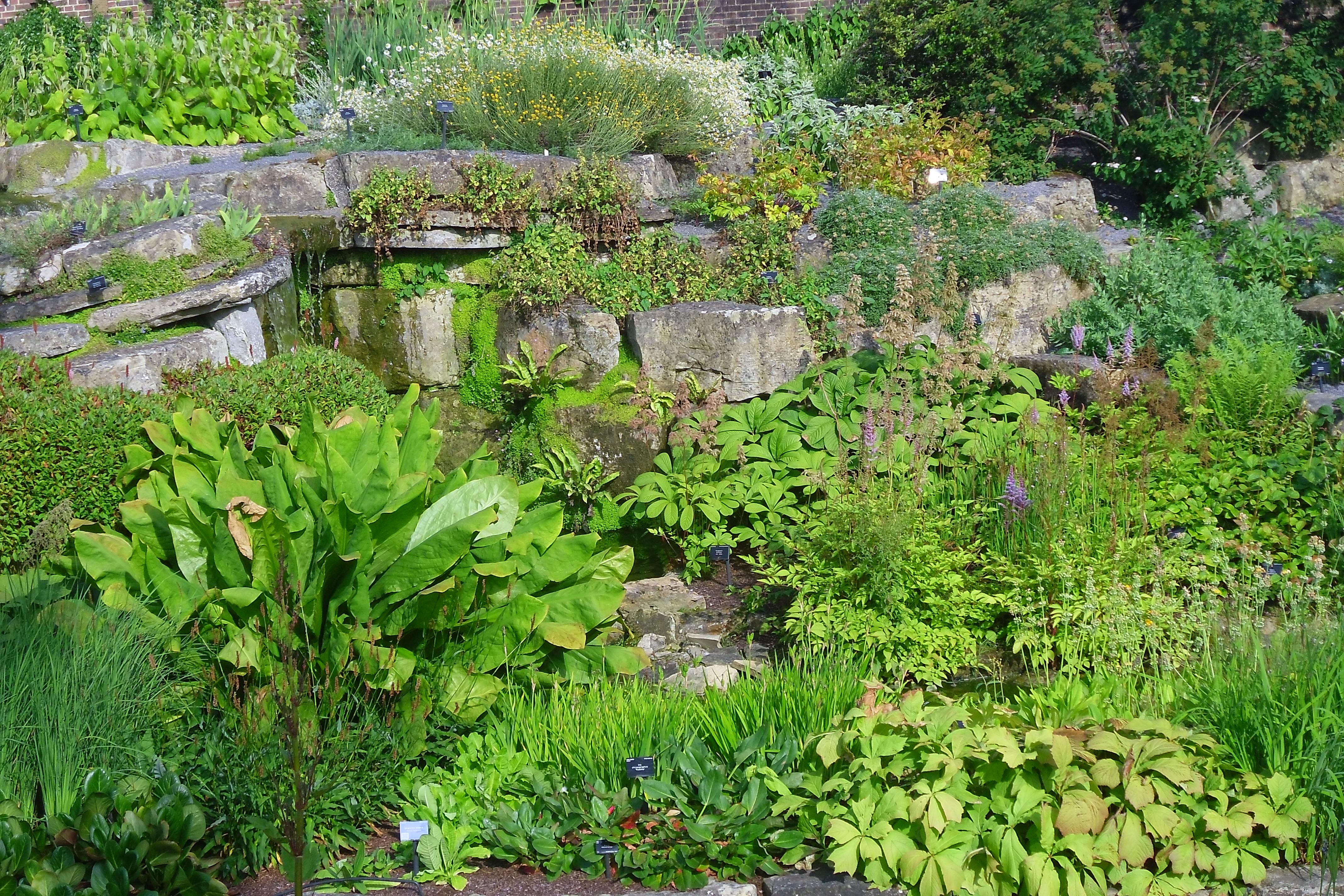 Rockery At Kew Gardens London 2 Herb Growing Ireland
