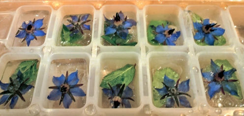 borage ice cubes jpeg
