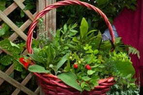 Herbs Galore