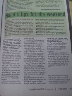 examiner by Fiann O Nuallain